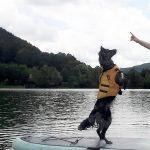 SUP-Hund-Aussie