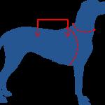 Hundeschwimmweste richtig messen